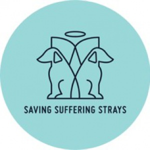Saving Suffering Strays